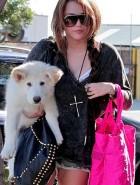 Miley Cyrus puppy